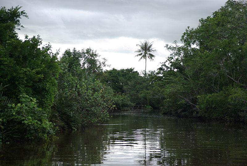 Klias Wetlands